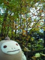 2009年10月 群馬の山の家にて 黄葉始め