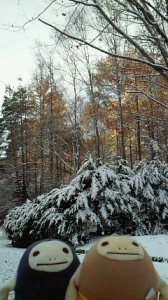 初雪 2009年11月2日