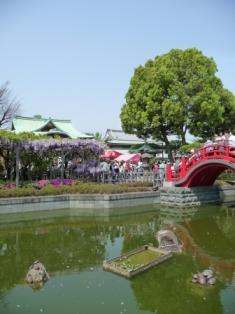 亀戸天神 藤まつり 池