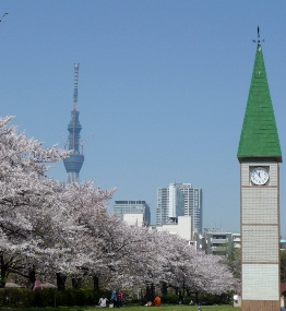 桜並木と東京スカイツリー 2011年4月