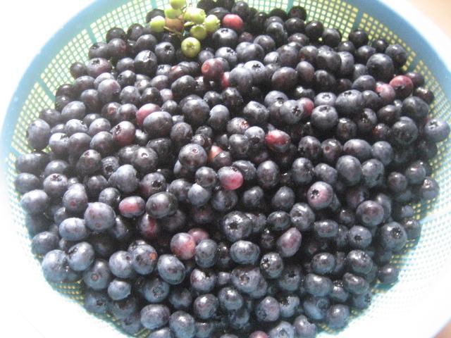 片品産ブルーベリー