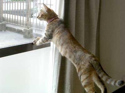 窓の外を眺めるくう