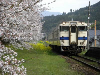 桜と菜の花とローカル線