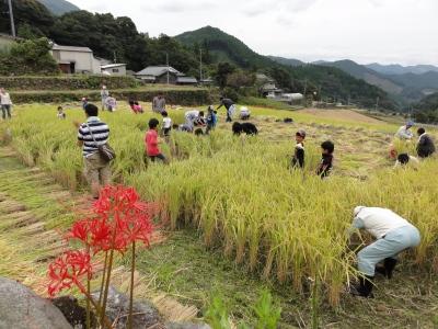 棚田の稲刈り体験