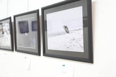 盛岡 カジュアルフォトスタジオ フォトプラス 写真展 佐藤勝洋 野鳥の情景 アオサギ