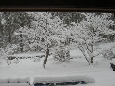 雪景色(2013.1.14の1)