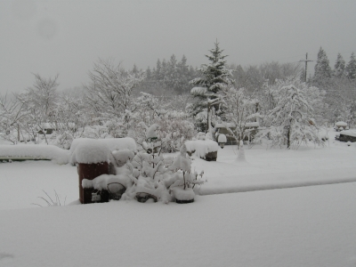 雪景色(2013.1.14の2)