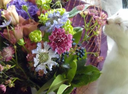 s-2010 Sep 19 peach&REPO&flowers&ルポ悼み 020.jpg