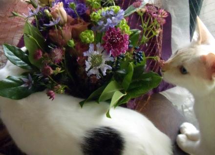 s-2010 Sep 19 peach&REPO&flowers&ルポ悼み 027.jpg