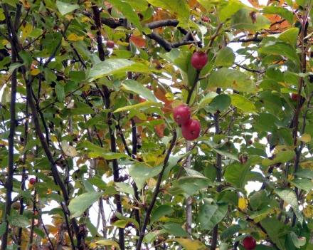 s-2010Nov13 autumn 011.jpg