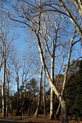 s-2011 Jan18 079.jpg