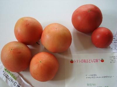 初なり・天なりトマト