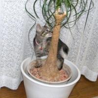 なぜか気になる木だニャン