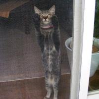 オンモ行きたいよ〜 開けてってばー