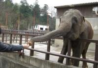 象にエサを供給中