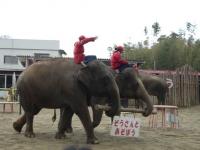 象使いはタイからやってきています