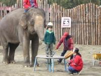 子どもに帽子をかぶせる象さん