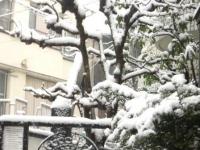 玄関開けたら雪景色