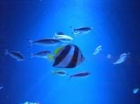 お魚たち2