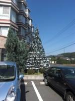 少し早いクリスマスツリー