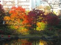 毛利庭園の紅葉その1