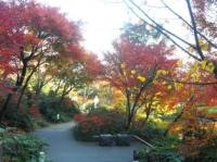 毛利庭園の紅葉その2
