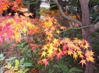 毛利庭園の紅葉その3