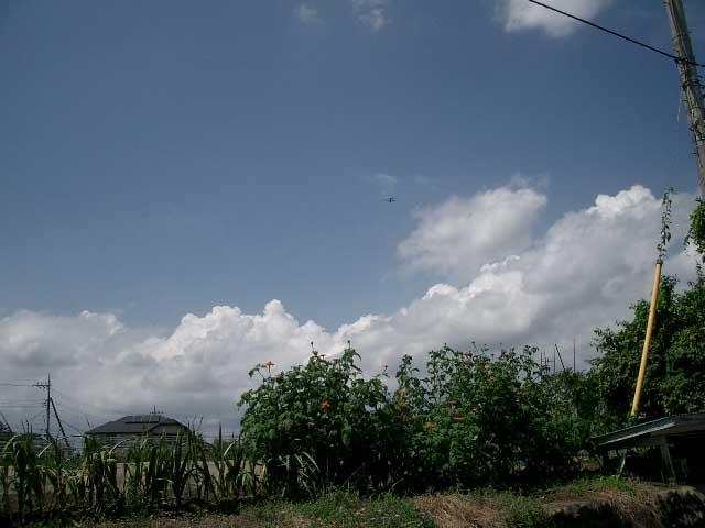 羽村の夏の空