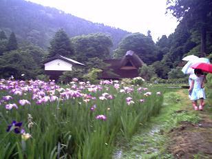 花菖蒲(千古の家)