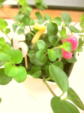 観葉植物にプラスワンでちょこっとオシャレに