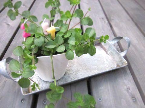 観葉植物用受け皿としても