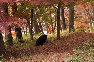 黒いのが落ち葉拾っている友人。