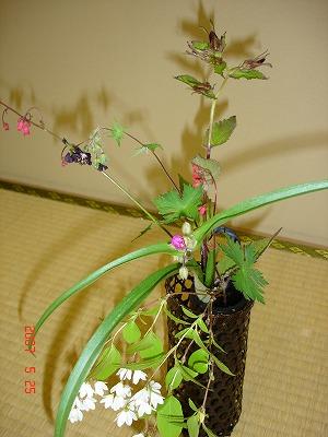 0525 Flower2