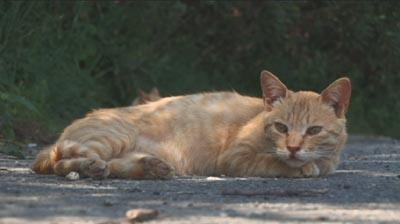 夢の猫01