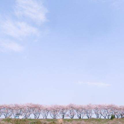20110411-_0011451.jpg