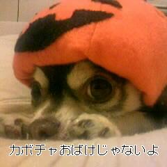 091018_004746~000.JPG