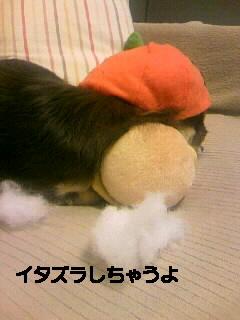091018_010527~000.JPG