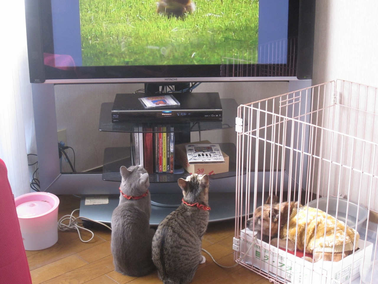 ゴロキーテレビ