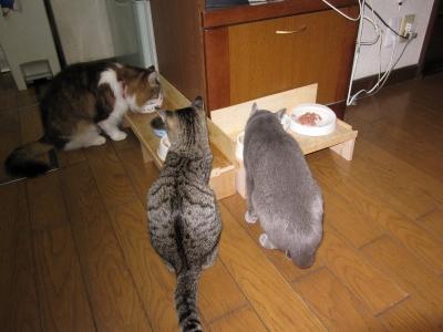 3ニャン食事