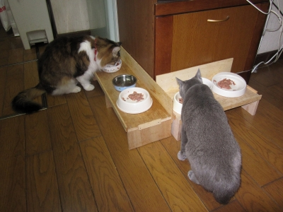 2ニャン食事