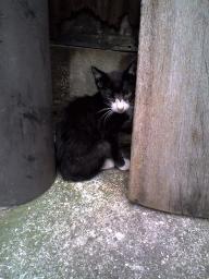 広島駅西の猫