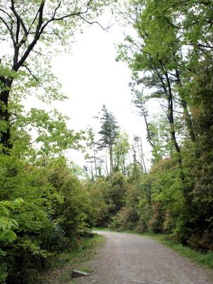 牧野ヶ池緑地の舗装されてない道