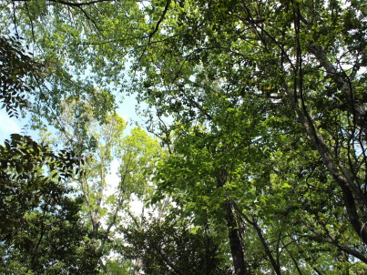 牧野ヶ池緑地の木々