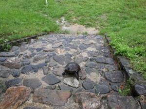 鴨川デルタの階段を下りる亀さん2