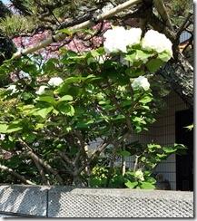2014-04-26-09-00-26_photo