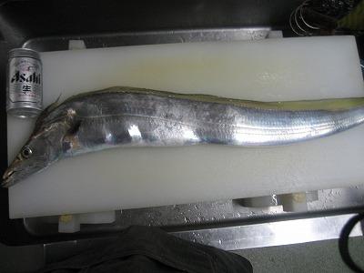 太刀魚 1.7キロ