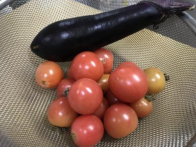 庭のミニトマト