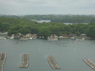 賢島・英虞湾の真珠棚