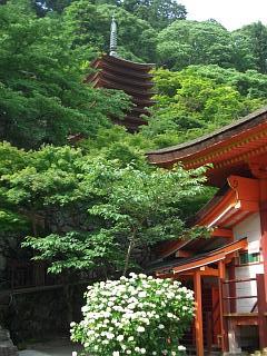 談山神社・多武峰(とうのみね)のあじさい