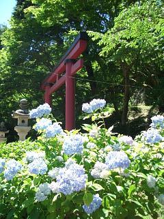 談山神社、入口の鳥居付近のあじさい